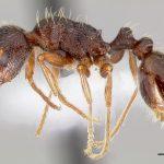 Ants-Pavement